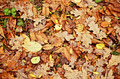Natural background: yellow and orange dry leaves - PhotoDune Item for Sale