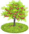 Heartshaped apples in an appletree  - PhotoDune Item for Sale