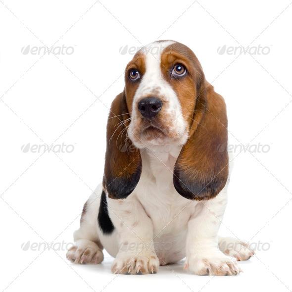 Image Gallery Hush Puppies Dog