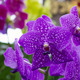 Orchid flower in the garden - PhotoDune Item for Sale