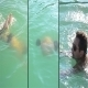 Man Swimming In Pool Water 3 - 3 videos - VideoHive Item for Sale
