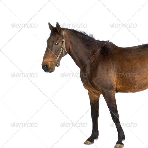 Royalty Free Stock Photography : Horse Photodune 247116