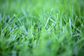 Green Grass Texture - PhotoDune Item for Sale