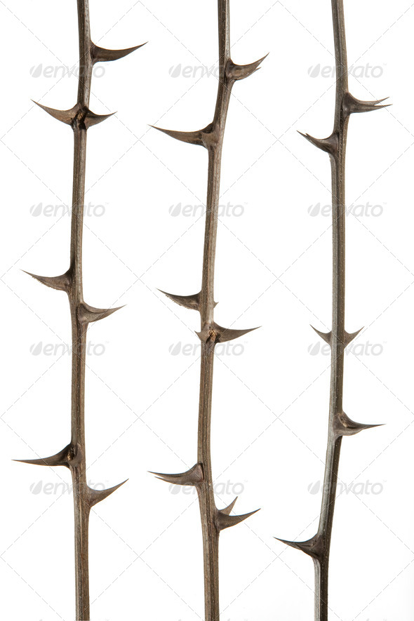 thorns - Stock Photo - Images