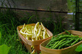 Fresh Yellow and Green Beans - PhotoDune Item for Sale