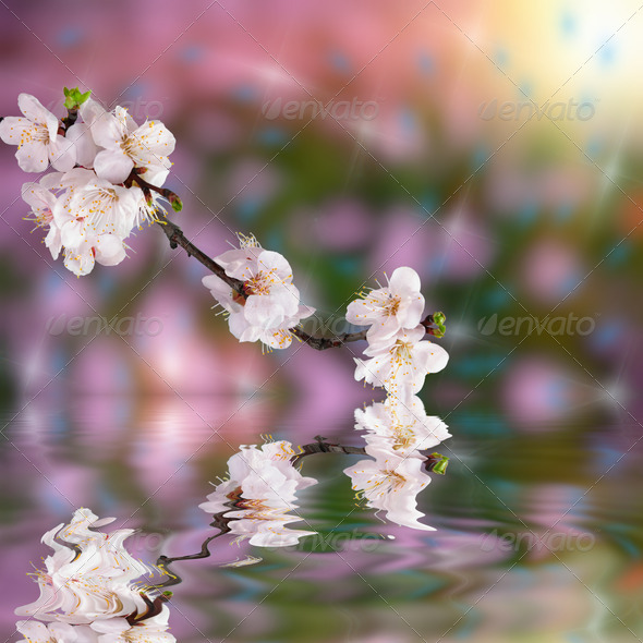 Beautiful background with flower - Stock Photo - Images