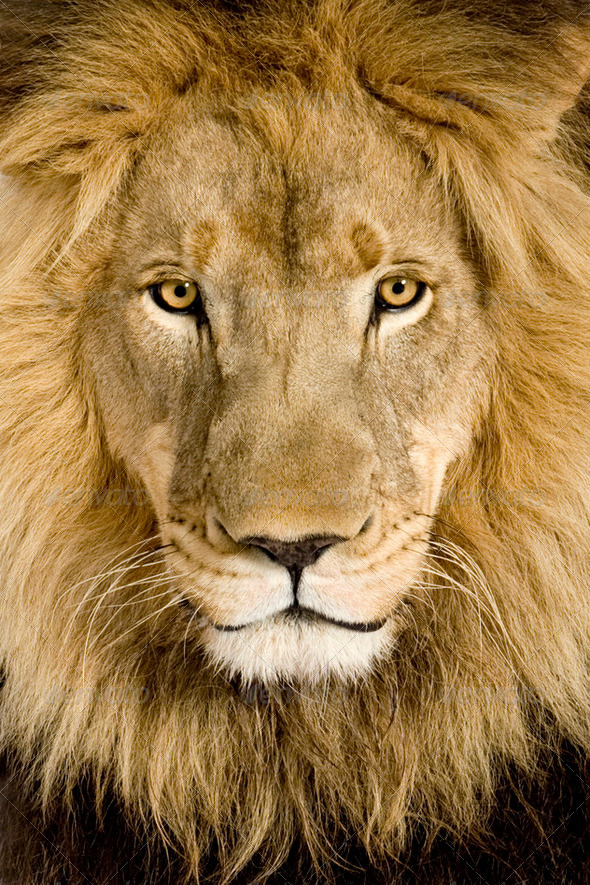 Lion Half Face Paint