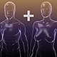 Male and Female Anatomy bodies Bundle - 3DOcean Item for Sale