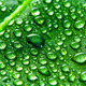 Green leaf and water drops - PhotoDune Item for Sale