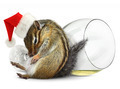 Funny drunk chipmunk dress santa hat with champagne glass - PhotoDune Item for Sale