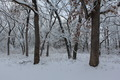 Winter Snow Fall in Park - PhotoDune Item for Sale
