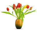 tulips and vessel over white - PhotoDune Item for Sale