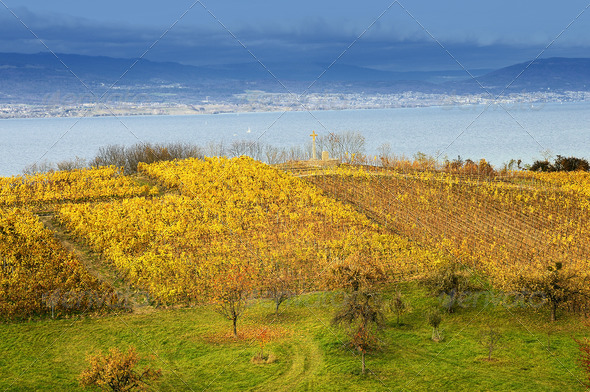 vineyard above Lake Neuchatel - Stock Photo - Images