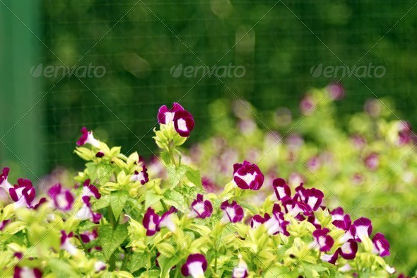 colorful flowers - Stock Photo - Images