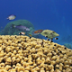 Colorful Fish On Vibrant Coral Reef 2 - VideoHive Item for Sale