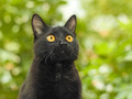 Black cat on green foliage background - PhotoDune Item for Sale