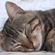 The Cat Is Sleeping - VideoHive Item for Sale