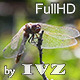 Dragonfly - VideoHive Item for Sale