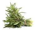 Rosemary bunch on the white background - PhotoDune Item for Sale