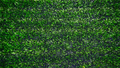 Artificial grass - PhotoDune Item for Sale