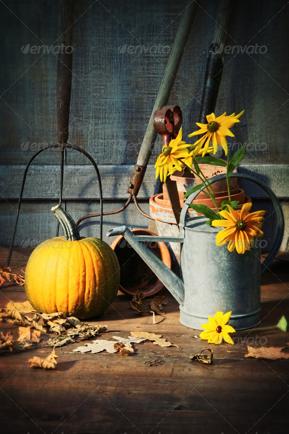 Garden shed with tools, pumpkin and flowers - Stock Photo - Images