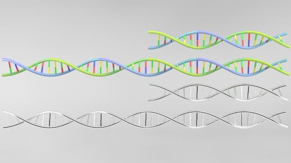 3DOcean DNA strand model 3098058