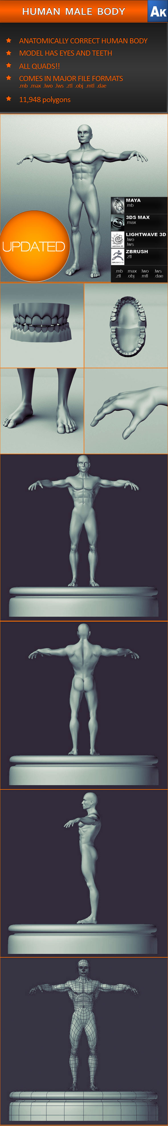 Human Male Body (Anatomically correct) - 3DOcean Item for Sale