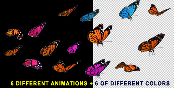 Motion Graphics Flying Butterflies 60 Fps Videohive