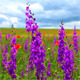 A Walk Is In The Flowering Field - VideoHive Item for Sale
