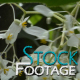Flowers 6 FullHD Stock Footage H264 - VideoHive Item for Sale