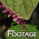 Flowers 9 FullHD Stock Footage H264 - VideoHive Item for Sale