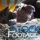 """Fishes 2"" Stock Footage in Full HD 1920x1080 - VideoHive Item for Sale"