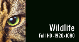 Wildlife - Full HD Footage -1920x1080