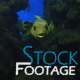 """Fishes 12"" Stock Footage in Full HD 1920x1080 - VideoHive Item for Sale"