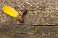 Acorns with leaves over wood background - PhotoDune Item for Sale