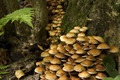 large group of autumn mushrooms  - PhotoDune Item for Sale
