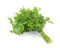 Fresh Parsley - PhotoDune Item for Sale