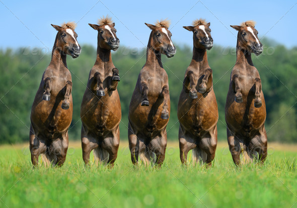 Five rear ponies on green field - Stock Photo - Images