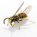 wasp isolated - PhotoDune Item for Sale