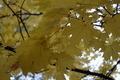 Autumn Leaves 2 - PhotoDune Item for Sale