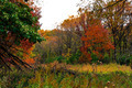 Fall Autumn Wooded Meadow Landscape - PhotoDune Item for Sale