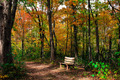 Fall Wooded Forest Path With Bench Landscape - PhotoDune Item for Sale