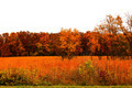 Fall Autumn Colors Landscape - PhotoDune Item for Sale