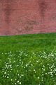 Brick wall on flower field - PhotoDune Item for Sale