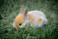 Young Little Rabbit - PhotoDune Item for Sale