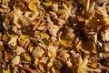 Autumn Leaves 5 - PhotoDune Item for Sale