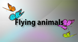 Flying animals