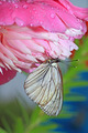 butterfly is under flower to hide from rain - PhotoDune Item for Sale