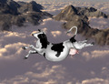Flying cow - PhotoDune Item for Sale