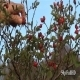 Picking Rosehips - VideoHive Item for Sale